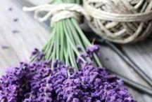 ~Flowers Lavender~