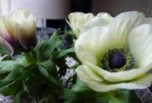 ~Flowers Ranunculus & Anemones~