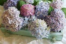 ~Flowers Hydrangea~