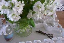 ~Flowers Hollyhocks & Stocks~
