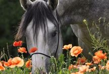 Equine. / All things equine! / by A. Mitch.