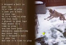 Dog Inspiration