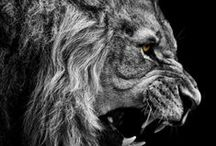 BE BOLD! / I am not afraid of an army of lions led by a sheep; I am afraid of an army of sheep led by a lion.