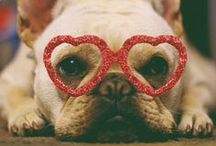 Valentines Dog Outfit Inspiration / Valentine's Day Inspiration for Outfits and Fancy Dress for Dogs