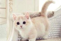 Munckin cat / ~This cuuute cats