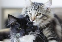 Katter / ~Cats can be your bestfriend, without saying a word to you
