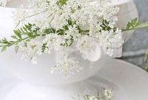 ~Flowers Cow Parsley~