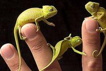 15. Hagedissen en salamanders. / Kruipend gespuis
