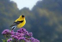 27. Zangvogels. / Kleine vogels. Gloria Murphy Louise Mc Donald. Teri Williams  Joanna Baxter