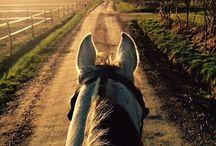 Horses + Equistrian