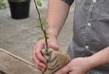 Gifts that Grow! / We at Tree2mydoor send trees, plants and seeds as gifts. Check out our selection of Gifts that Grow!