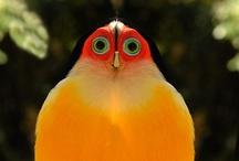 Fine feathered friends / God,s gorgeous birds. / by Nikola Botzko Clapp