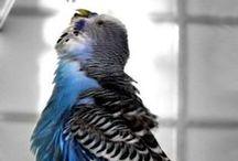 Birdies / Beautiful Birds / by Judie Nash