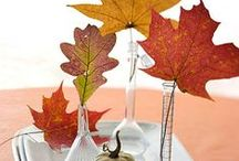 Fresh Fall Ideas / Ideas for beauty, design, relaxation, and home decor