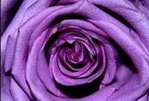 50 Shades Of Purple / Purple has been my favorite colour for a very long time