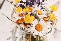 Pot Plants & Flowers
