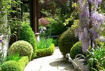Garden / Beautiful Garden