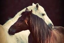 God's Beautiful Creatures! / by Tiffany Michelle