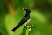 Bird Watching / by Gamboa Rainforest Resort Panama
