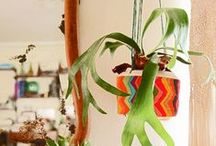Potted plants / A handy small jungle