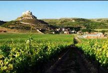 Visita bodegas en la Ribera del Duero / Descubre las mejores bodegas de la zona de la Ribera del Duero al mejor precio. Además podrás disfrutar de los espectaculares paisajes que ofrecen los pueblos de la Ribera.