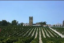 Visita bodegas en Jerez / Visita las mejores bodegas de la provincia de Jerez. Descubre su historia y degusta sus exquisitos vinos al mejor precio