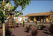 Visita bodegas en Castilla La Mancha / Visita las bodegas Castilla La Mancha al mejor precio. Podrás descubrir como se mezclan aquellas que tienen un estilo más vanguardista con las más clásicas y los increíbles viñedos que las rodean
