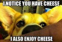 Doggy Stuff (: