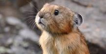 Animals / Cute animals and pets with fur, flippers, and feathers!