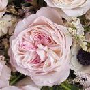 David Austin English Garden Roses / David Austin English Garden Roses are available at Jet Fresh Flowers in Miami for florists and event planners. Call us today for more information!