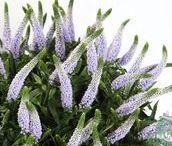 Fresh Filler Flowers