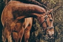 Maybe not a Black Beauty, but... / Horses