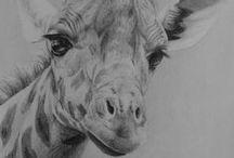 Pencil Drawing Lessons / Pencil Drawing Lessons by Nolan Clark