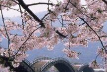 Beautiful Japan 日本