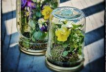 Herbes et jardins / Herbs and gardens