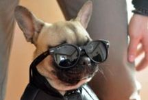 Animals wearing glassses / So cute!