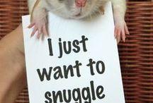 Rats :D