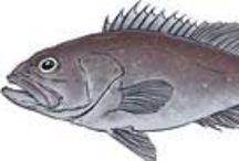 Peixe, Fish, Poisson / by Gabriel Menezes Ribeiro