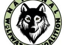 National Wolfwatcher Coalition / Educating, Advocating and Participating for Wolves.  See wolfwatcher.org for more.