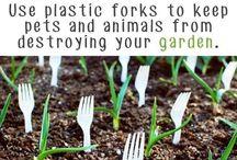 Gardening! My Therapy / Gardening