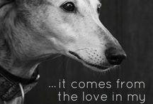 Schimanski / Greyhound