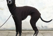 Eläinten vaatteet
