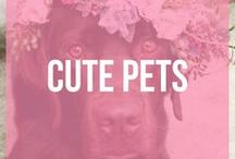 Cute Pets / The cutest dogs, cats, hamsters, bunnies, guinea pigs and much more!