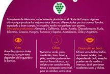 Las cepas de los vinos / Les pondremos información que será de gran ayuda para sus maridajes!
