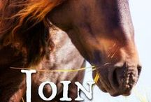 Island Series / The trilogy consists of Appaloosa Summer, Wednesday Riders, Join Up and a fourth book I'm working on right now (but, shhh ... everything about it is a secret!)