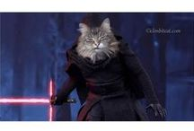 Star Wars Cats / Two of our favorite things - Star Wars movies and cats!