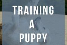 Training a Puppy / All the tips and tricks for training your puppy. Potty training, tricks, biting and commands.