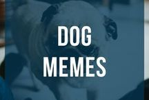 Dog Memes / All the funniest Dog memes.