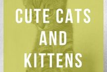 Cute Cats and Kittens / The cutest cats and kittens you'll find!