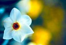 Art | The Botany of Desire / Botanical art by Imagekind artists.